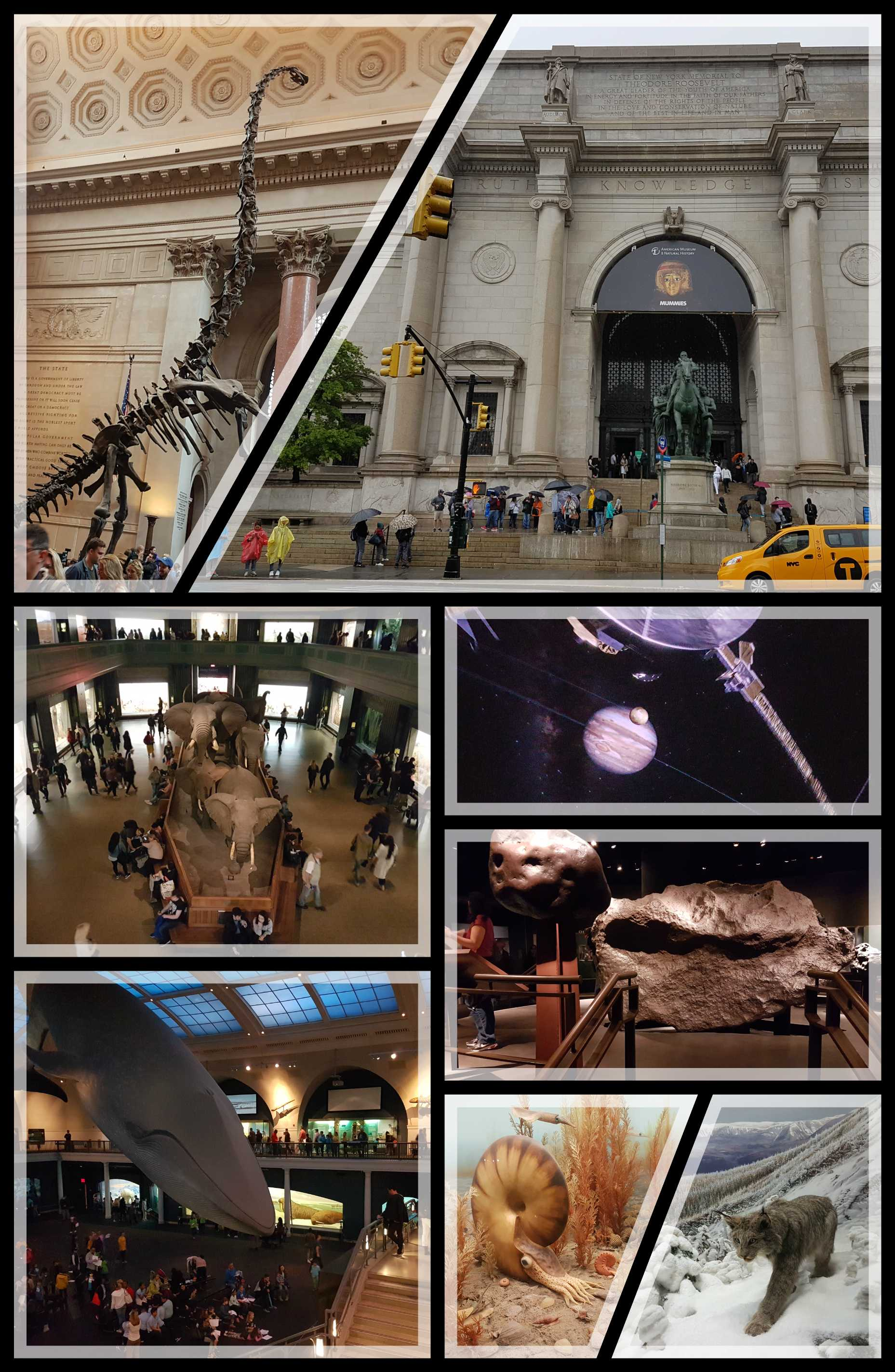 American Museum of Natural of History